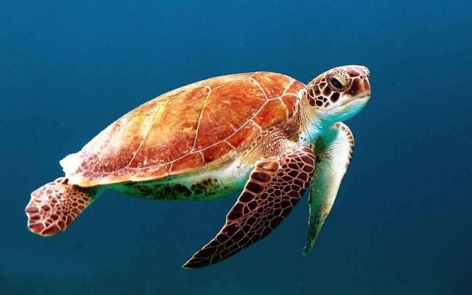 美しい海と自然を持つ奄美大島!空港について知っておこう!