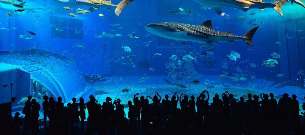 沖縄 水族館